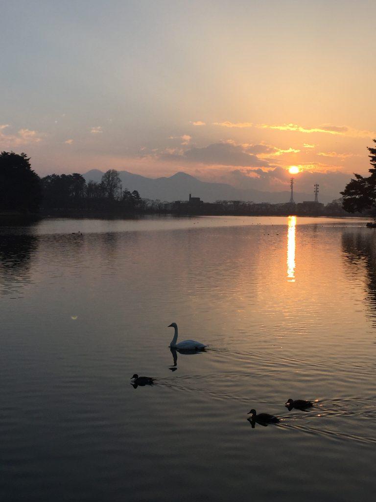 盛岡高松の池の夕景と、白鳥