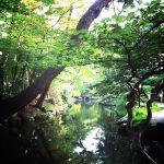 散歩好きは、盛岡に住んでいた頃から。いつまでも忘れない景色と匂い。