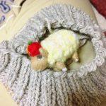 週末のてしごと。帽子を編んで、りんごを焼いてみて。