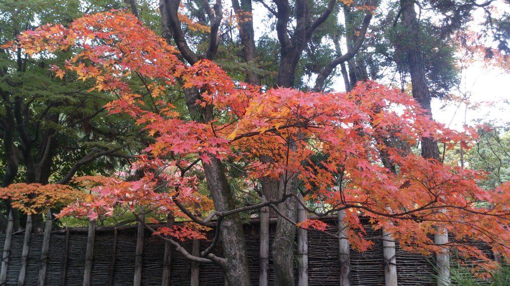 友泉亭の紅葉
