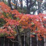 福岡の紅葉、友泉亭にて。彷徨う私(笑)