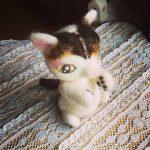 野良猫から、飼い猫に。三毛猫-作品番号4です。