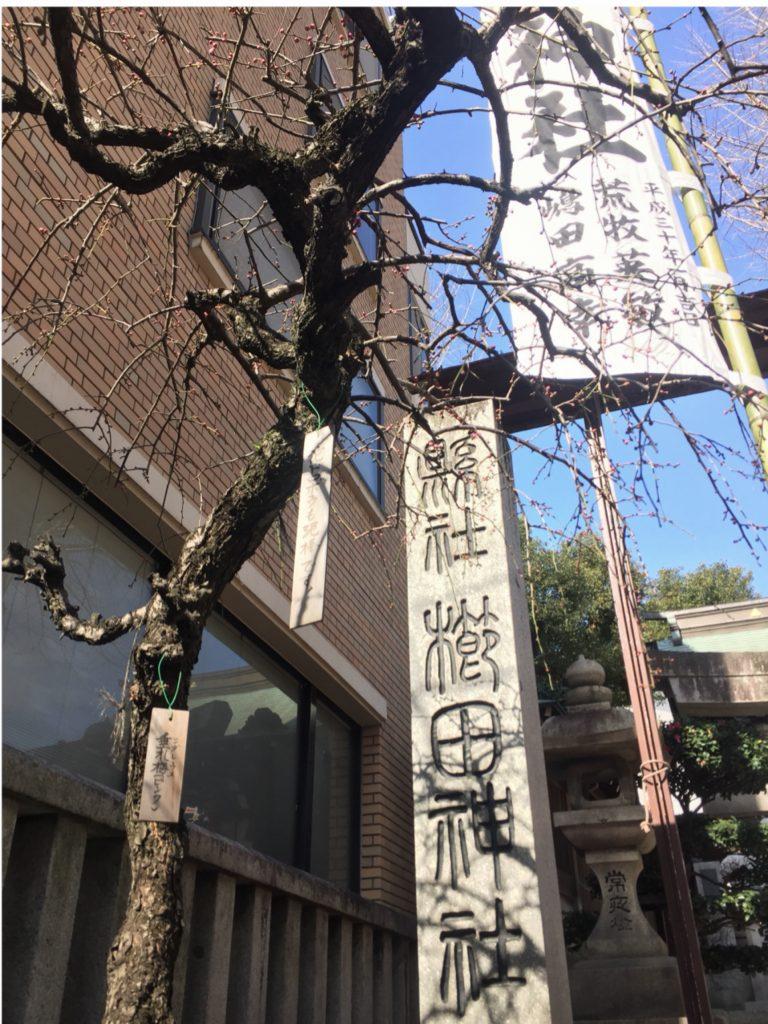 櫛田神社の枝垂れ梅