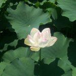 福岡城跡へ、再びのお散歩。水と緑と生き物に癒やされました。