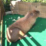 長崎バイオパークの、移動動物園に出かけてきました。