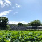 福岡城跡へ、蓮の様子を見にお散歩。笹和紙の帽子と、ひつじ星人がお供。