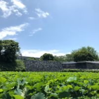 福岡城跡の石垣と、お堀の緑が美しい場所